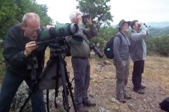 Observation of vultures at feeding